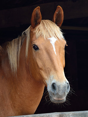 Inflamatory Lung Disease in Horses