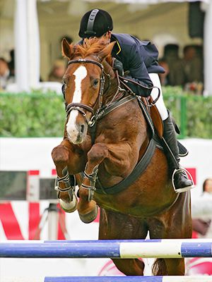 Ulcer in performace horses