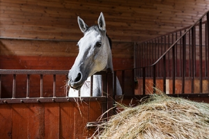 supplements for racing horses, underweight supplements for horses.