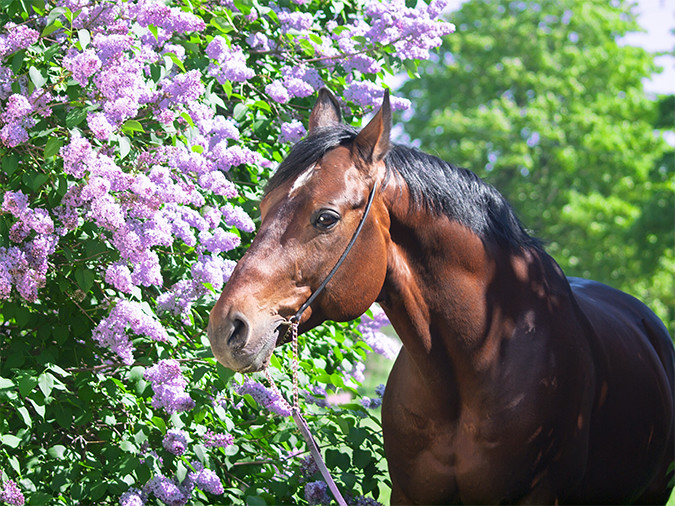 allergy supplements for horses