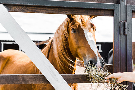 Helping Your Horse Gain Weight. immuvet best supplements