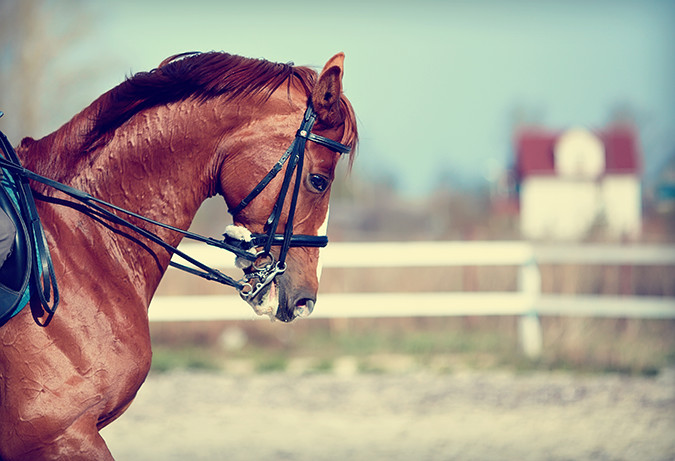 muscle disorders in horses